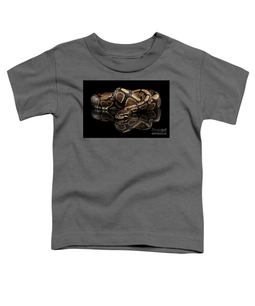 Ball Or Royal Python Snake On Isolated Black Background Toddler T-Shirt
