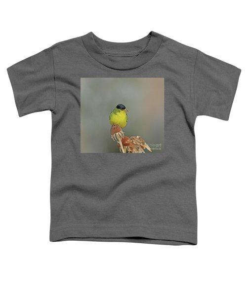 Lesser Goldfinch Toddler T-Shirt