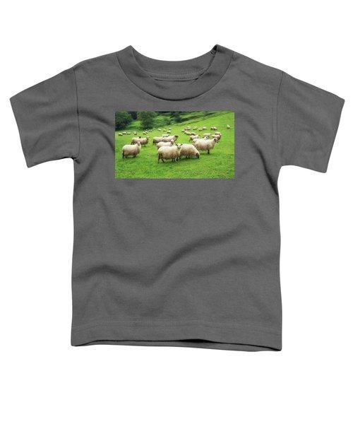 A Flock Of Sheep Toddler T-Shirt