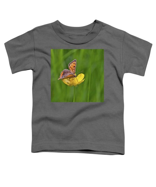 A Small Copper Butterfly (lycaena Toddler T-Shirt