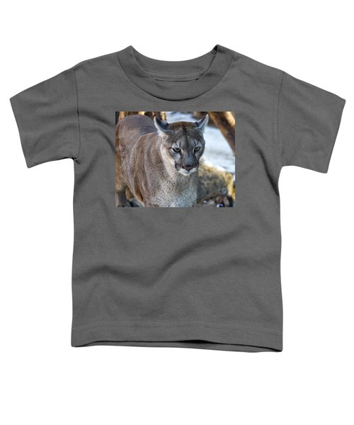 A Stunning Mountain Lion Toddler T-Shirt