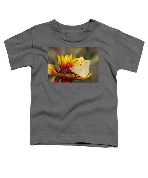 Alfalfa Butterfly On Blanketflower Toddler T-Shirt