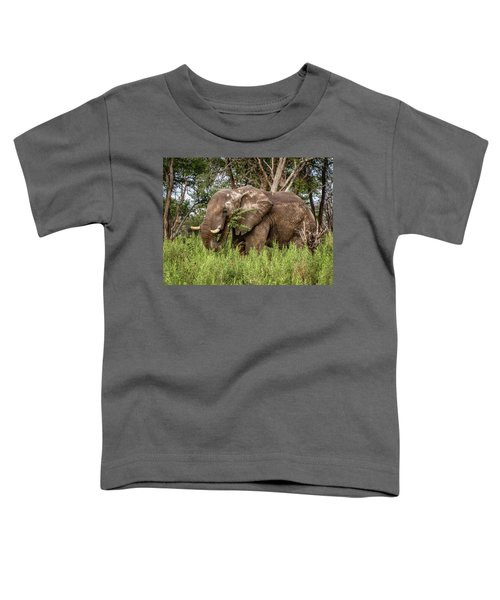 Alpha Male Elephant Toddler T-Shirt