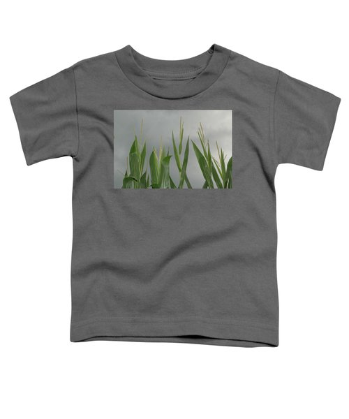 Amber Waves Toddler T-Shirt