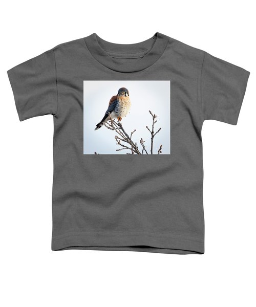 American Kestrel At Bender Toddler T-Shirt