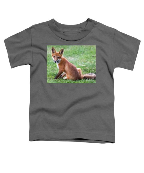 American Red Fox  Toddler T-Shirt