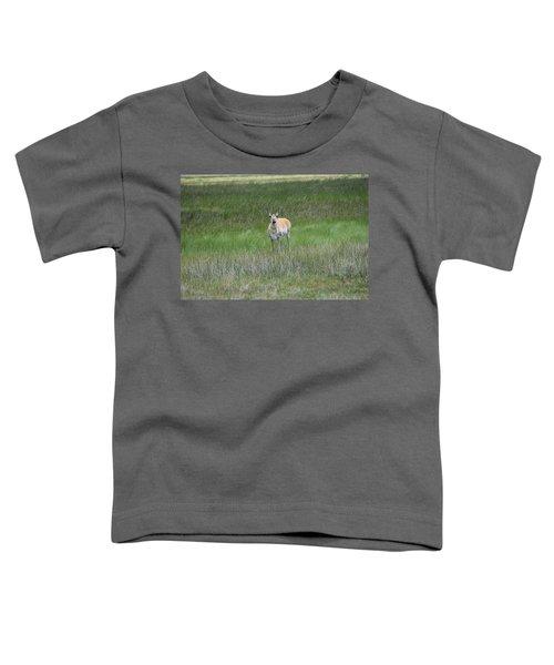 Prong Horned Antelope Lake John Swa Co Toddler T-Shirt