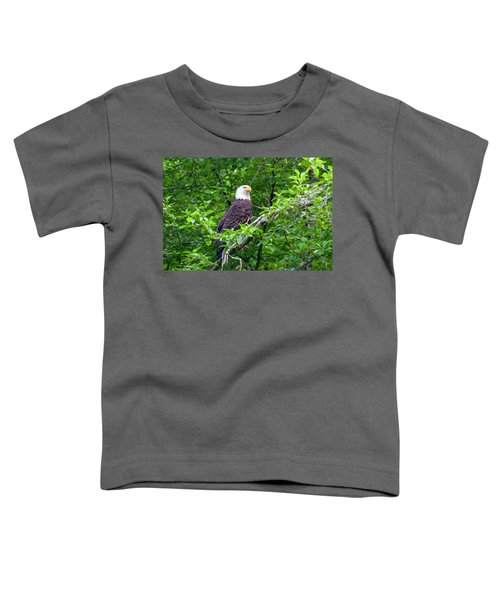 Bald Eagle In Tree Toddler T-Shirt