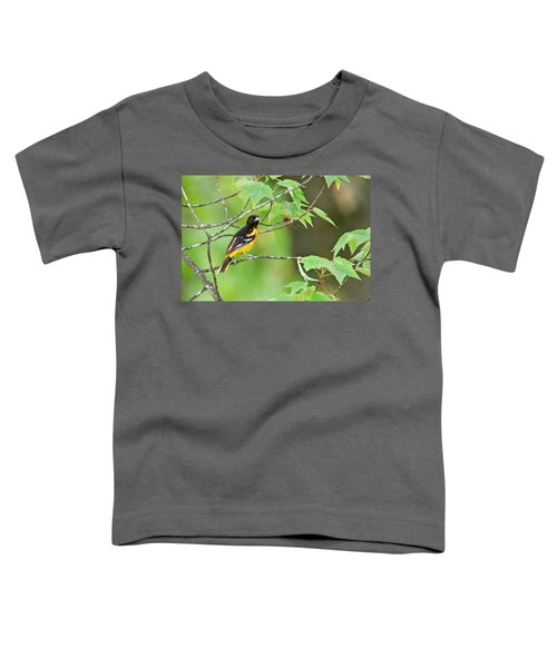 Baltimore Oriole Toddler T-Shirt by Michael Peychich