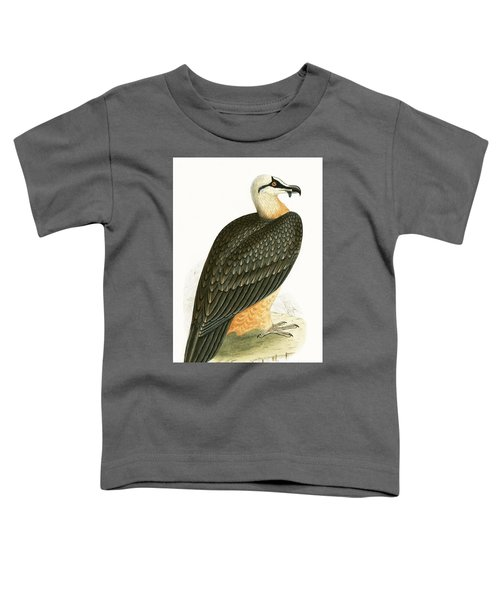 Bearded Vulture Toddler T-Shirt by English School