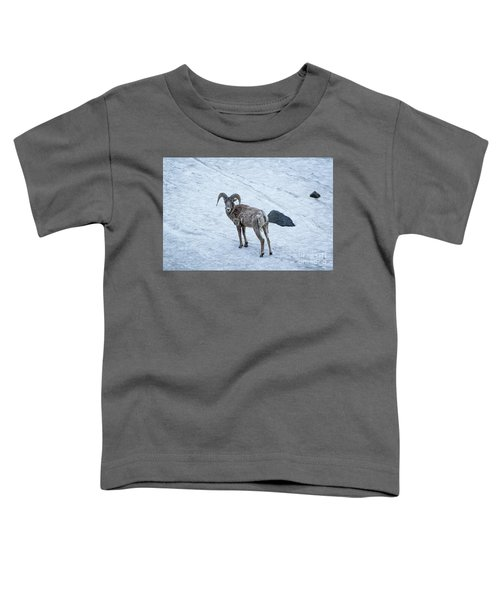 Big Horn Sheep  Toddler T-Shirt