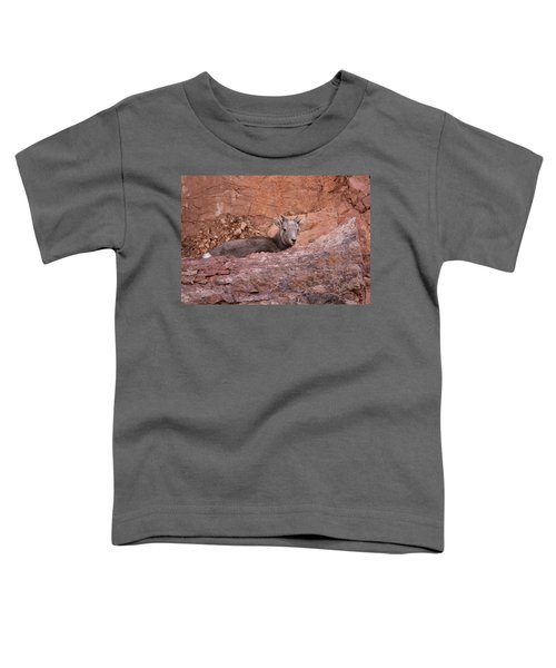 Bighorn Lamb1 Toddler T-Shirt