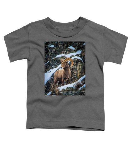 Bighorn Ram 2 Toddler T-Shirt