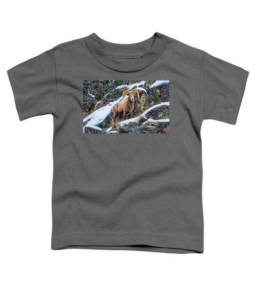 Bighorn Ram 3 Toddler T-Shirt