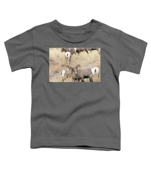 Bighorn6 Toddler T-Shirt