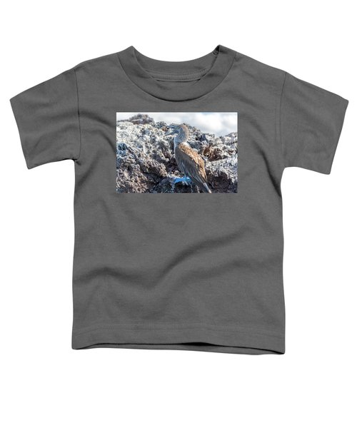 Blue Footed Booby Toddler T-Shirt by Jess Kraft