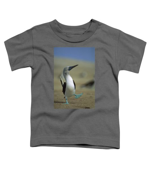 Blue-footed Booby Sula Nebouxii Toddler T-Shirt by Tui De Roy