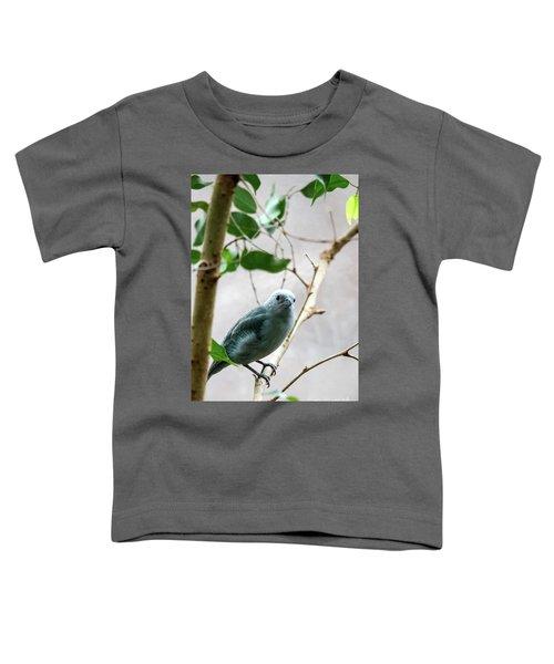 Blue-grey Tanager 2 Toddler T-Shirt