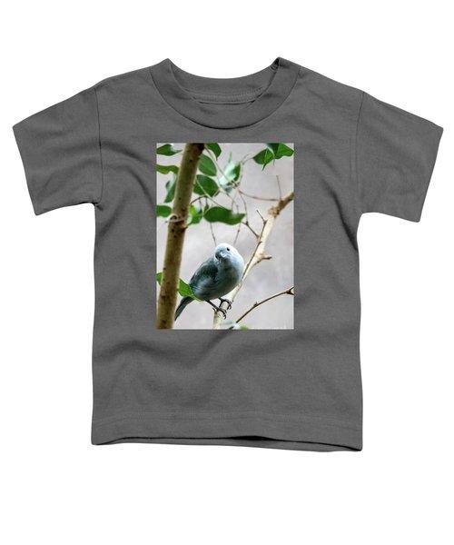 Blue-grey Tanager Toddler T-Shirt