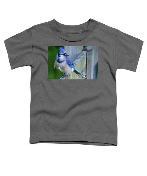 Blue Jay Fluffed Toddler T-Shirt