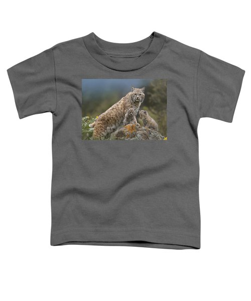 Bobcat Mother And Kittens North America Toddler T-Shirt