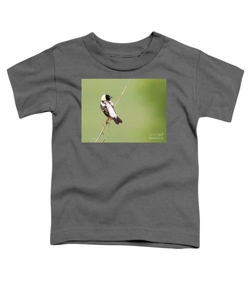 Bobolink Looking At You Toddler T-Shirt