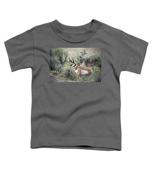 Pronghorn Buck Toddler T-Shirt