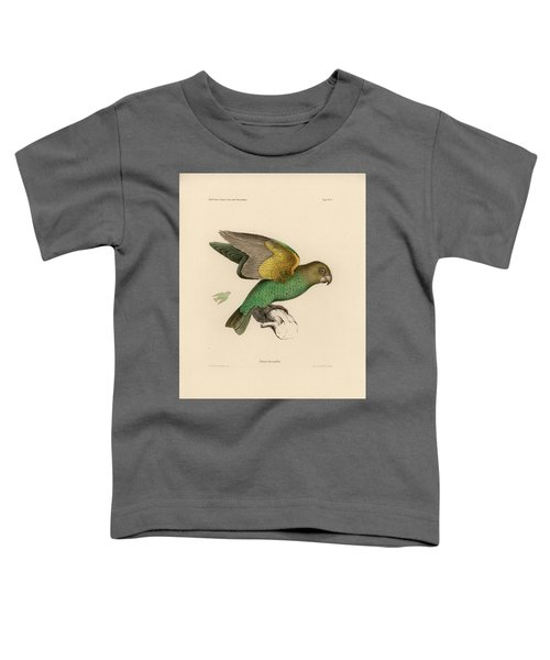 Brown-headed Parrot, Piocephalus Cryptoxanthus Toddler T-Shirt