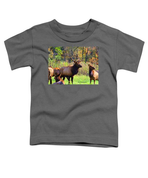 Buffalo River Elk Toddler T-Shirt
