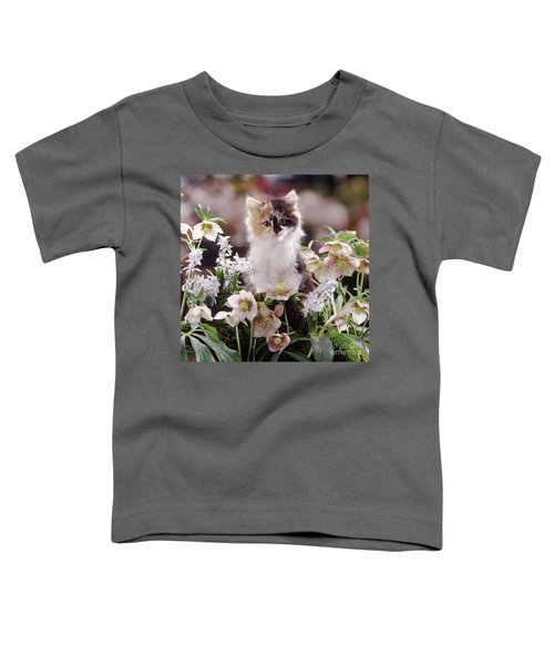 Calico And Scillas Toddler T-Shirt