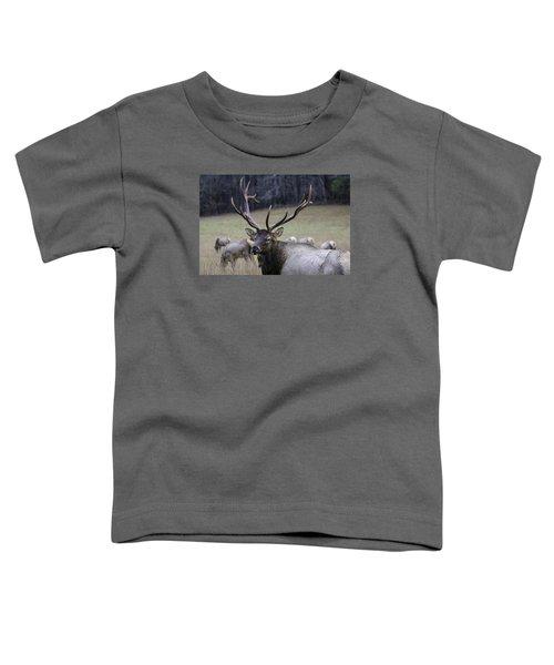 Cataloochee Elk Toddler T-Shirt