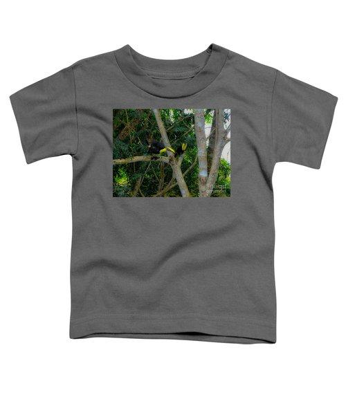Chestnut-mandibled Toucans Toddler T-Shirt