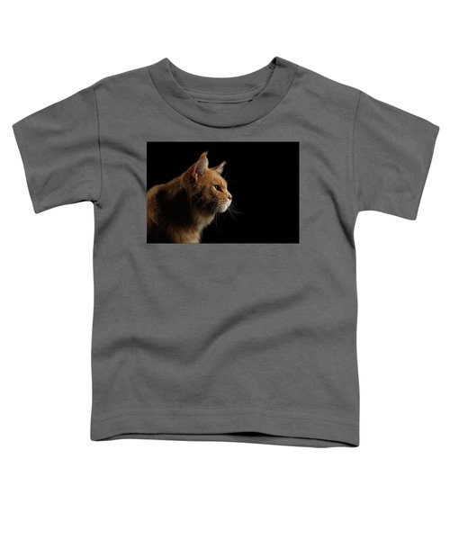 Close-up Portrait Ginger Maine Coon Cat Isolated On Black Background Toddler T-Shirt