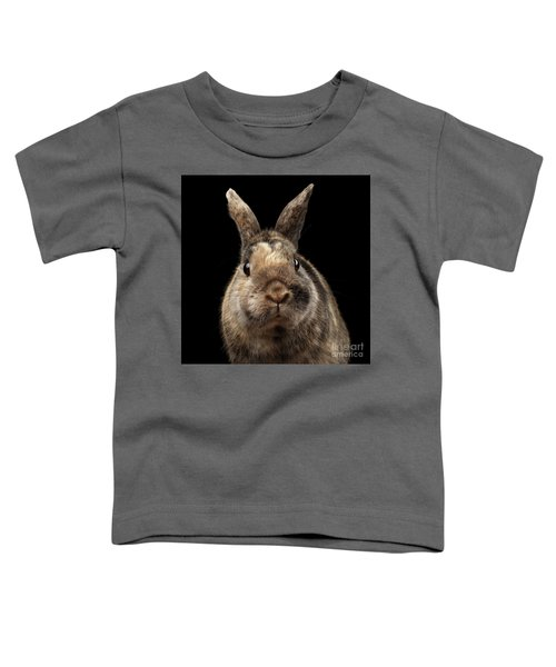 Closeup Funny Little Rabbit, Brown Fur, Isolated On Black Backgr Toddler T-Shirt