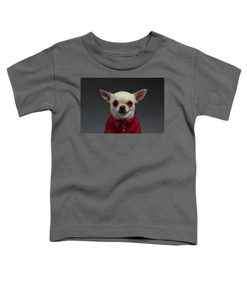 Closeup Portrait Chihuahua Dog In Stylish Clothes. Gray Background Toddler T-Shirt