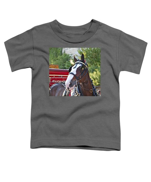 Clydesdale At Esp Toddler T-Shirt