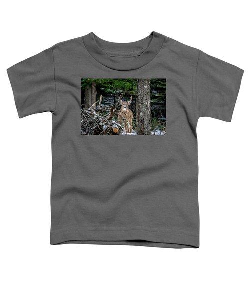 Curious Buck Toddler T-Shirt