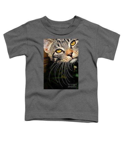 Curious Kitten Toddler T-Shirt