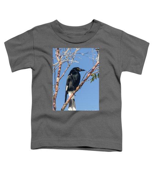 Currawong Toddler T-Shirt by Werner Padarin