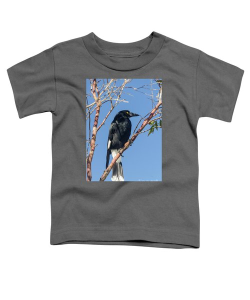 Currawong Toddler T-Shirt