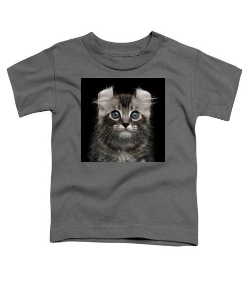 Cute American Curl Kitten With Twisted Ears Isolated Black Background Toddler T-Shirt