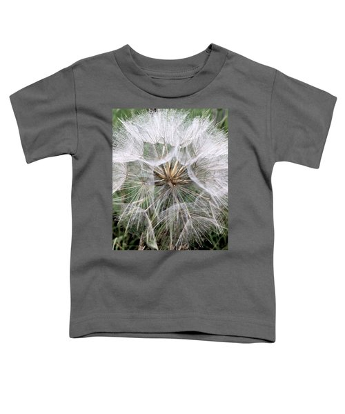 Dandelion Seed Head  Toddler T-Shirt by Kathy Spall