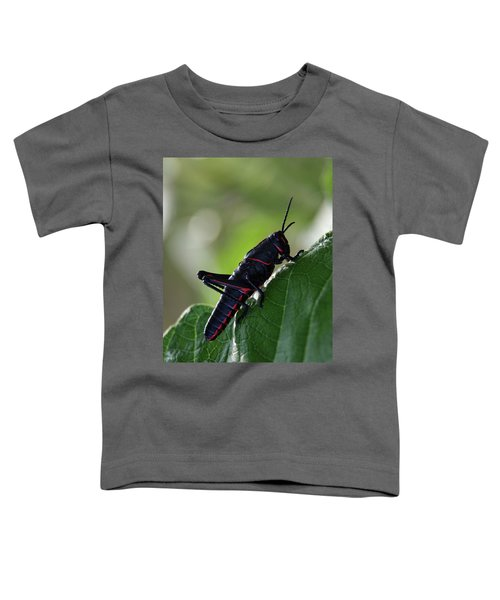 Eastern Lubber Grasshopper Toddler T-Shirt by Richard Rizzo
