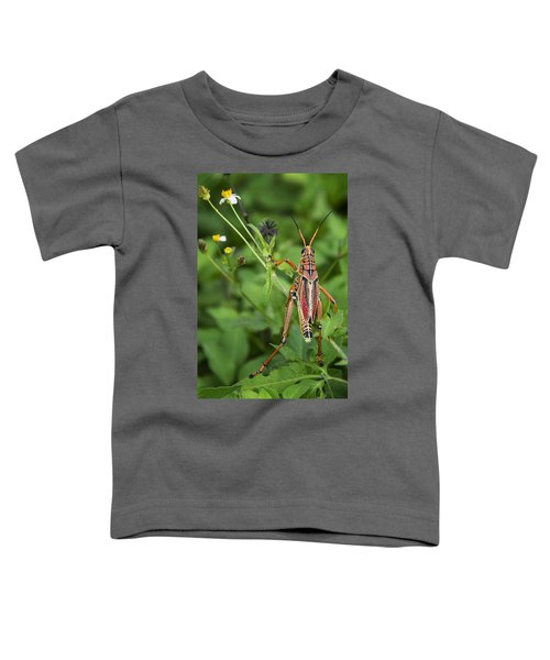 Eastern Lubber Grasshopper  Toddler T-Shirt by Saija  Lehtonen
