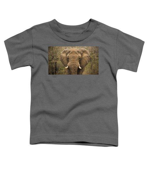 Elephant Watching Toddler T-Shirt