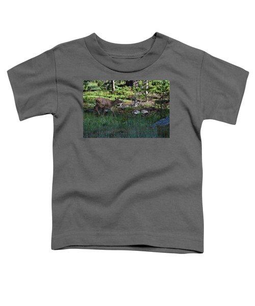 Baby Elk Rmnp Co Toddler T-Shirt