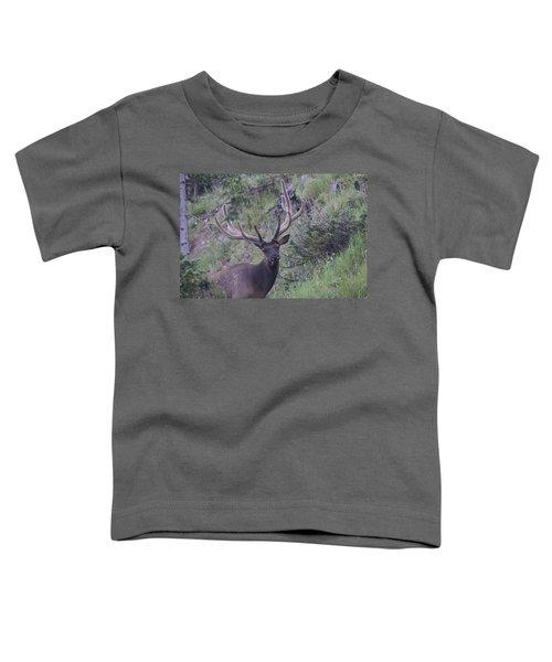 Bull Elk Rmnp Co Toddler T-Shirt