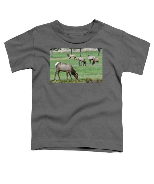 Elk On Golf Course Estes Park Colorado Toddler T-Shirt