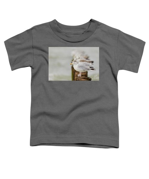 European Herring Gulls In A Row Fading In The Background Toddler T-Shirt