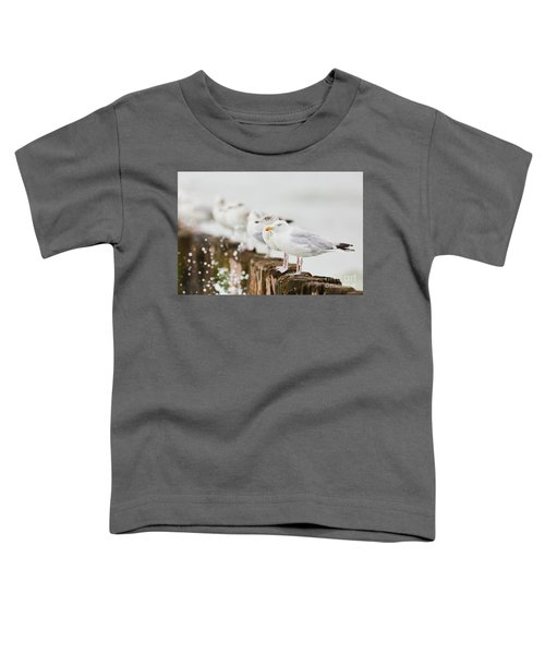 European Herring Gulls In A Row  Toddler T-Shirt